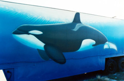 Endangered Orcas in Motion-Tractor Trailer