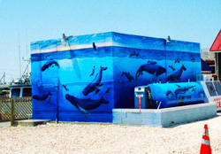 The Whale Watch and Research Center